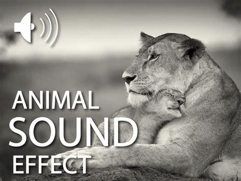 animals sound effects auroratech