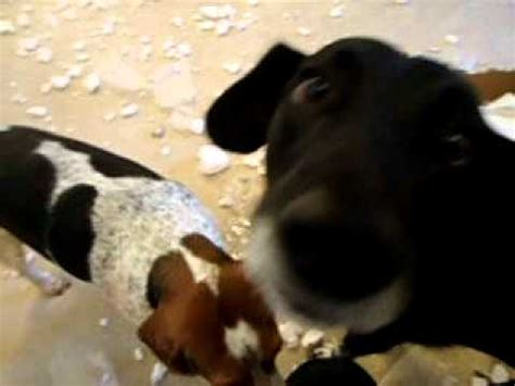 how to stop a dog messing in the house guilty dog after making a big mess youtube