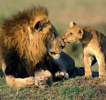 Father And Son Wild Animals Wallpaper Fanpop