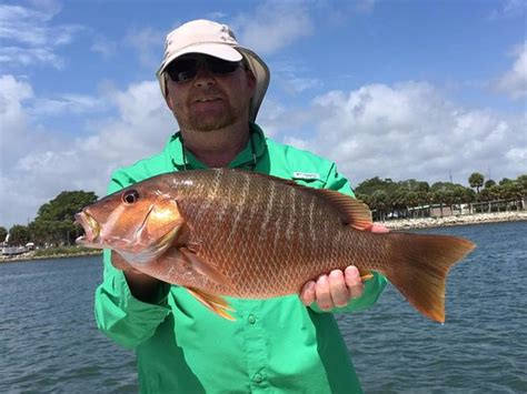 charter boat fishing east coast schoolmaster snapper picture of east coast fishing