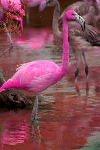 flamingo color 25 best ideas about pink flamingos on