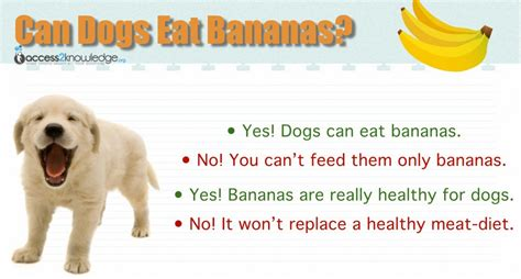 dogs eat bananas can dogs eat bananas access 2 knowledge