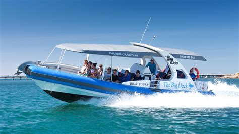 harbourfront boat tours big duck whale watching dolphin cruises victor harbor