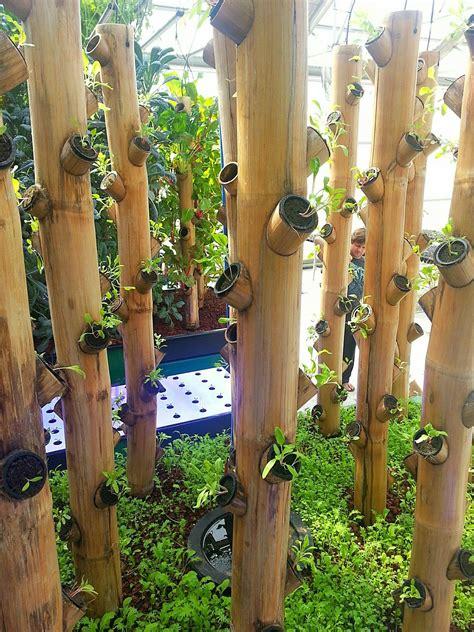 newly planted bamboo vertical garden vertical garden diy
