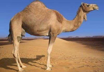 imagenes de animales del desierto animales del desierto nombres fotos cu 225 les son y qu 233