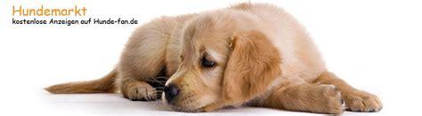 zu kaufen hunde kaufen verkaufen hundemarkt