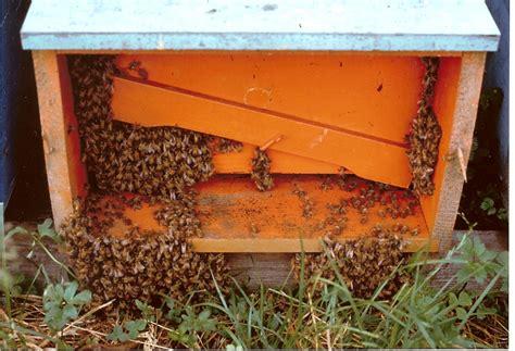 cassetta per apicoltori giallo a pisa vandali uccidono 2 milioni di api