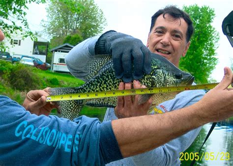Vermont Records Black Crappie Record Www Imgkid The Image Kid Has It