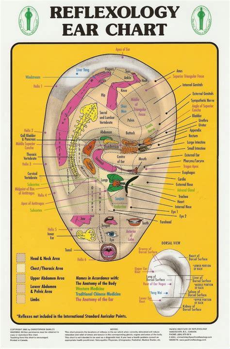 ear chart reflexology ear chart healthy mind