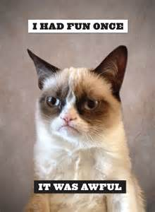 Hilarious grumpy cat pictures