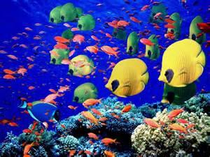 Tropical Fish Wonderful Natural Color Design   Travel Review