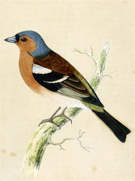 let s keep it wild non audubon free birds