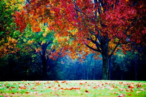 colorful tree colorful landscape photography autumn tree fog and mist