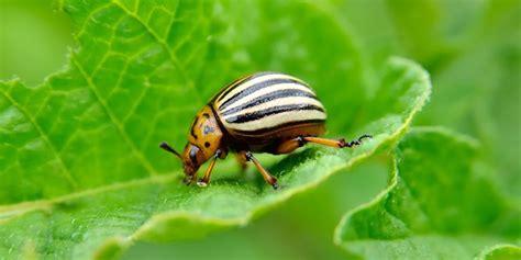 destructive garden pests    common bugs