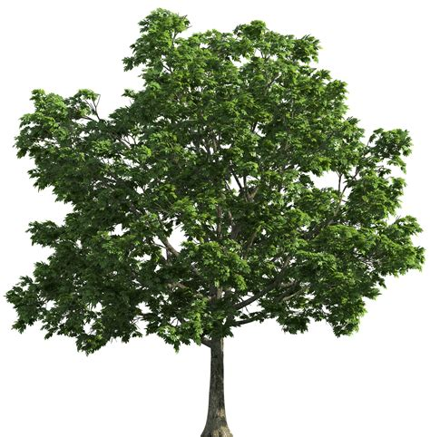Kaost Shirt Free This High Quality 5758 tree transparent png clip best web clipart