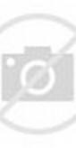 hewan lucu, gambar hewan lucu, foto hewan lucu, gambar anjing lucu ...