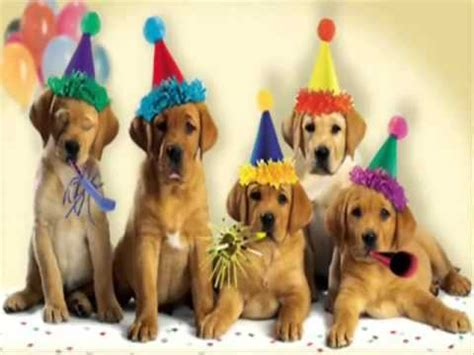 imagenes de happy birthday con perros feliz cumplea 241 os youtube