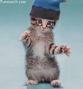 Funny Dancing Cats Animations
