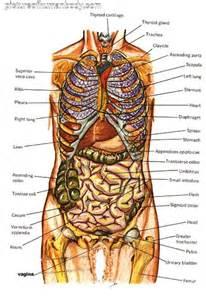 Human body anatomy internal organs diagram
