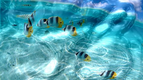 3d wallpaper for laptop screen watery desktop 3d screensaver floods your screen with