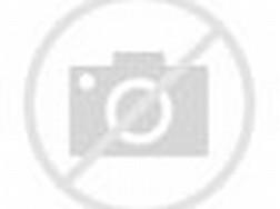 3D Cartoon Cute Funny Animals