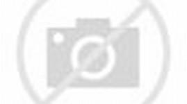 Sakura Cherry Blossom Anime