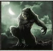 Werewolf  Werewolves Photo 24033227 Fanpop