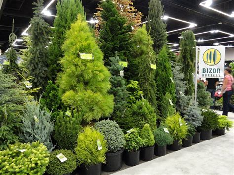 Conifer Garden Ideas Conifers Beautiful Conifers How I Thee Makes My Go Pitter Patter