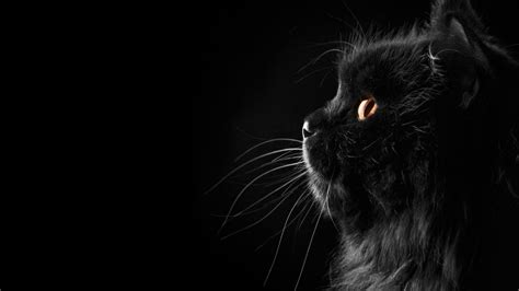 black kitten wallpaper wallpapers black cat wallpaper cave