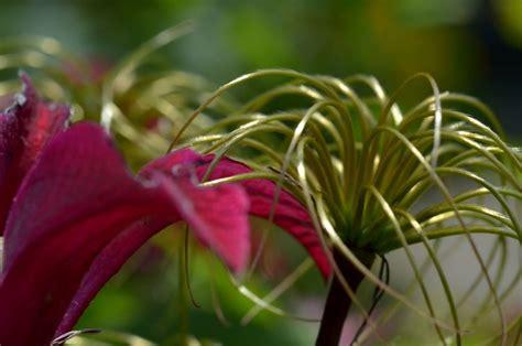 blumen pflanzen im garten pflanzen und blumen im garten seite 3