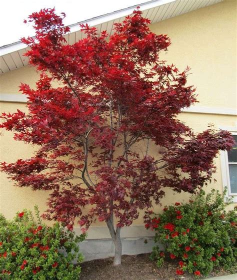 eight great small trees for landscaping small spaces