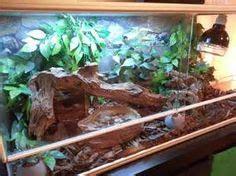 enclosures monkey skink enclosures