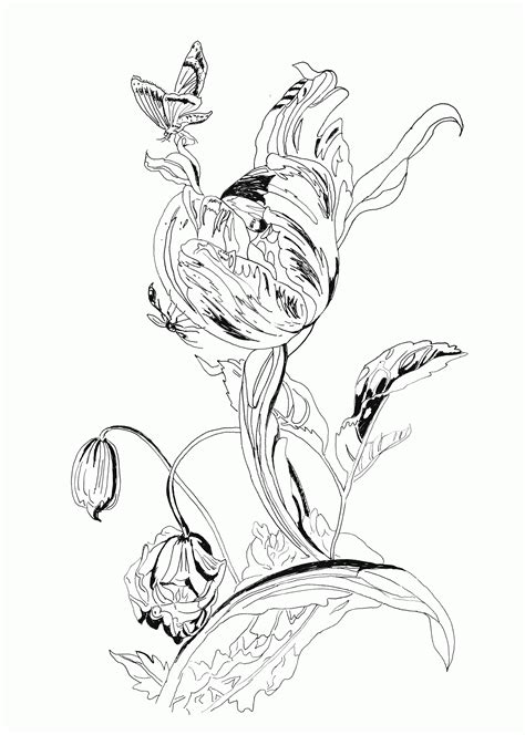 botany coloring book botany coloring pages coloring home
