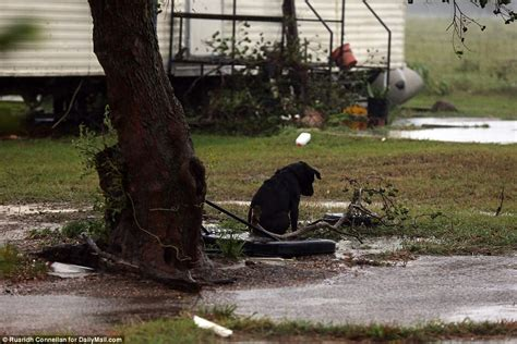 hurricane harvey dogs photos of abandoned dogs in hurricane harvey are breaking the world s
