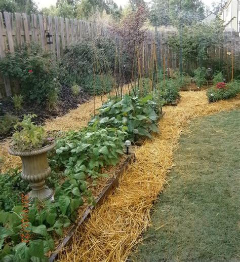 giardino biodinamico tutti i trucchi per creare un orto sinergico