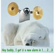 Bear Funny  Animal Humor Photo 19936971 Fanpop