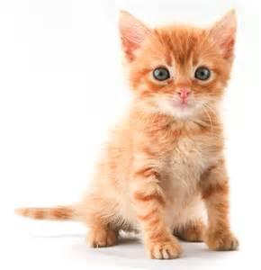 ginger-cat.jpg