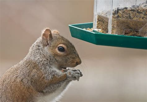 how to keep squirrels out of bird feeders bob vila radio