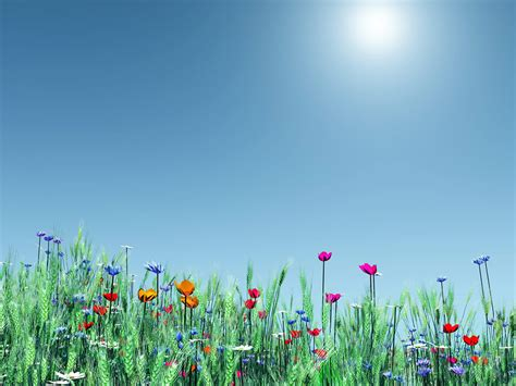 wallpaper flower spring pictures world spring flower nice wallpaper