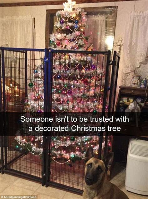christmas tree fence for dogs boredpanda users fails from drone disasters to risque decorations daily mail