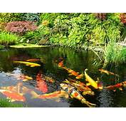 Tips To Build Koi Fish Pond  Smart Home Decorating Ideas