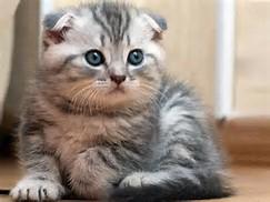 Gambar Kucing Paling Lucu