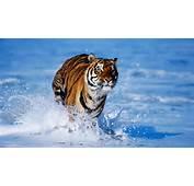 Wild Animal Wallpaper Hd Download