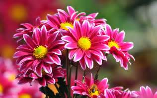 beautiful flower beautiful fresh flowers