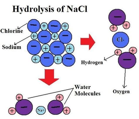 difference b w hydration and hydrolysis what is the difference between hydration hydrolysis