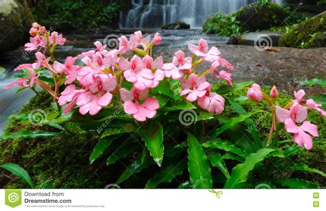 foto fiore bocca di fiori di bocca di e fiori rosa fotografia stock