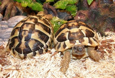 per tartarughe terrario per tartarughe lade
