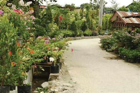 Bibit Bunga Tanjung tentang kung bunga di tepi kota harian medanbisnis