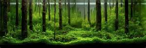 An Intermediate Guide to Aquascaping   Aquaec Tropical Fish