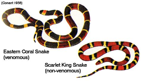 color pattern of coral snake natural selection in the wild